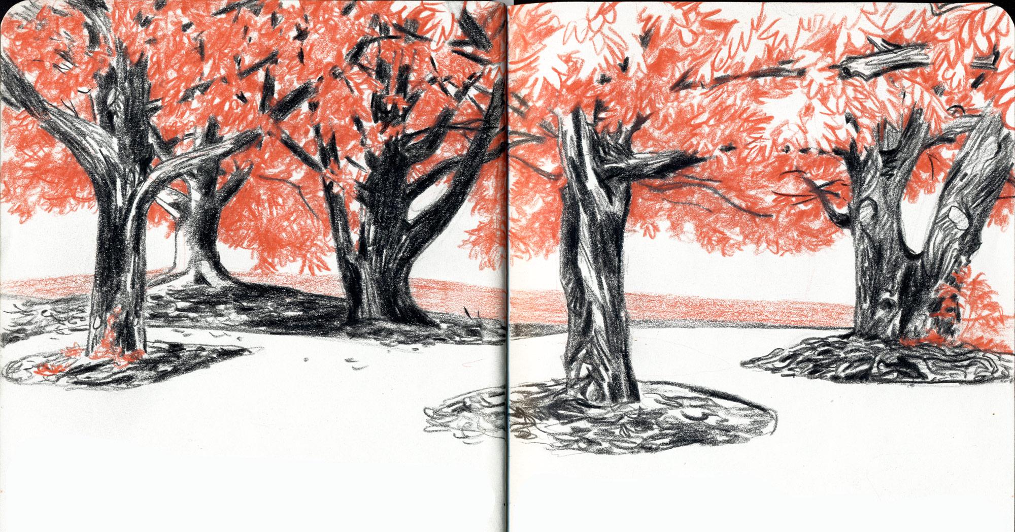 alberi dal vero